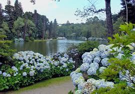 Resultado de imagem para primavera e o rio