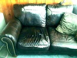 best couch for dog owners leather couches and dogs best couch for dog owners leather couches