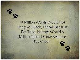 Loss Of Pet Quotes Extraordinary Best 48 Pet Loss Quotes Ideas On Pinterest Dog Loss Dog Passing