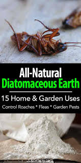 all the diatomaceous earth uses makes de one items homeowners can use to handle a broad