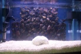 picture of lava rock aquarium background