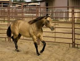 Portable Round Pen Pointers Expert Advice On Horse Care