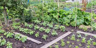 the top 4 vegetable garden layout ideas
