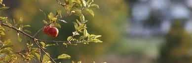 Powell Gardensu0027 Blog Unfamiliar Flowers And Fruit Of FallFruit Tree Shapes