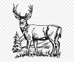 Download Hunting Deer Drawings Clipart White Tailed Deer