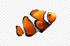coral reef fish drawing. Contemporary Fish Clownfish Coral Reef Fish Angelfish Clip Art  On Reef Fish Drawing R