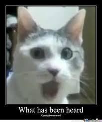 shocked cat by Scrotie McBoogerballs - Meme Center via Relatably.com