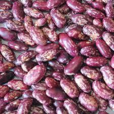 <b>Wholesale Purple</b> Bean