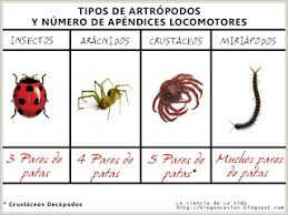 Resultado de imagen de clasificacion de los insectos para niños