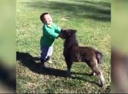 baby mini horse. Delighful Horse This Toddler Playing With A Baby Mini Horse Is The Cutest Thing Ever U2013  VIDEO Break Intended Baby Mini Horse O