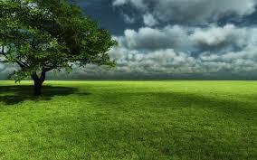 Green Grass Field HD Wallpaper Background Images