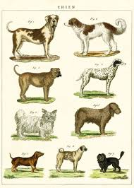 A Chart Of Dogs Cavallini Dog Chart Decorative Wrap