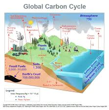 best carbon cycle images carbon cycle earth  carbon cycle diagram