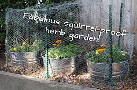 how to plant a garden. Squirrel-proof Herb Garden. | Tiaskitchen.com/plant-herb-garden How To Plant A Garden
