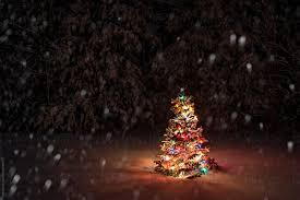 Falling Christmas Tree Lights Snow Falling On Christmas Tree By Rob Sylvan Stocksy United