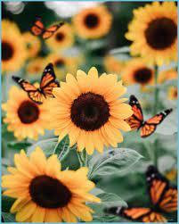 Aesthetic Butterflies Wallpapers - Top ...