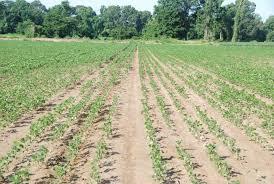 Free Mississippi Soybean Nematode Testing Through August