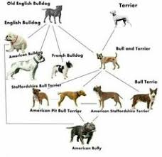 Staffy Colours Chart 13 Best Dogs Images In 2019 German Shepherd Dogs German