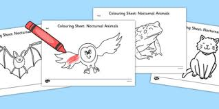 nocturnal animals coloring pages. Interesting Coloring Nocturnal Animals Colouring Pages  Nocturnal Animals Colouring Pages  Colour Animals For Coloring M