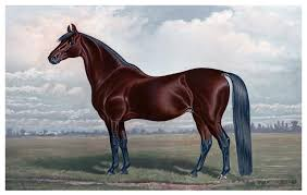 Cheap Horse Posters Cheap Horse Posters Magdalene Project Org
