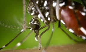 Resultado de imagem para Levantamento do Ministério da Saúde aponta 199 municípios em situação de risco para dengue