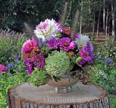 limelight hydrangea flowers turn greenish pink as they age making them wonderful for cutting even in late summer here they are combined with peach