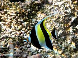 coral reef essay coral reef essay short notes on the importance of coral reefs in watts up that