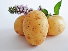 Poze : natură, plantă, camp, fruct, alimente, legume şi fructe, vegetal, agricultură, mânca, bauer, cartofi, bio, planta cu flori, rădăcină de legume, teren de plante, genul de cartof și tomate 4608x3456 - -