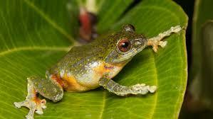 Żaba – Przedszkole u Cioci Mariolki