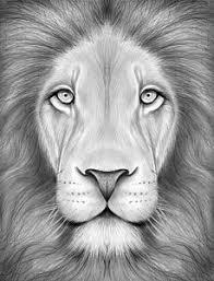 lion drawing color. Unique Lion Lion Drawing With Lion Drawing Color