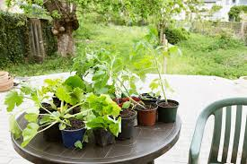 how to plant garden. how to plant your first organic garden - nature\u0027s path