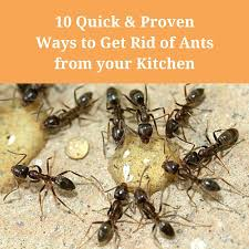 how to get rid of carpenter ants kill in home tree treat walls