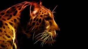 Hd Wallpapers Cool Animal Wallpapers Hd ...