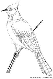 coloring book images of birds also coloring book birds adorable pages 4 coloring book images coloring book images of birds