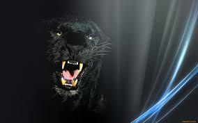 фото оскал пантеры