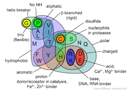 Compare Dna And Rna Venn Diagram Venn Diagram Showing The Properties Of The 20 Amino Acids