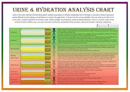 Body Hydration Level Chart Hydration Level According To Your Urine Lara Jezeph