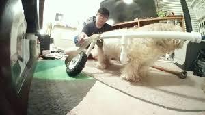 diy pvc dog wheelchair build timelapse