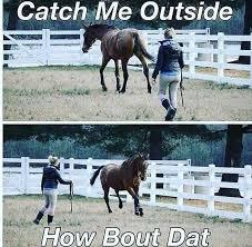 Image result for horse memes