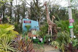 badshot lea garden centre in farnham