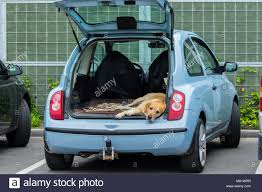dog waits in a hot parked car on its owner the owner has left the