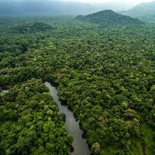 amazon rainforest. Exellent Rainforest Introduction To The Amazon Rainforest On M