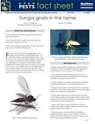 Fungus Gnats Attracted To Light Manual 20646464 Manualzz Com