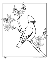 Small Picture Cherry Blossom Coloring Sheet Coloring Pages For Kids And For