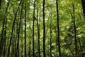 Forest Background Free Stock Photo Public Domain Pictures