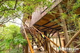 luxury tree house resort. The Treehouse Luxury Room At Tree House Resort