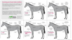 How To Evaluate Your Horses Weight Kpp
