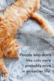 25 Quotes Only Cat Owners Will Understand Just Because Cat