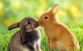 beautiful hd wallpapers of animals. Delighful Animals Cute Sweet Rabbit Animals Wallpapers HD Beautiful Wallpaper In Beautiful Hd Of S