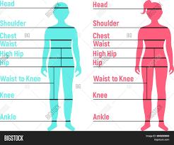 Boy Girl Size Chart Vector Photo Free Trial Bigstock